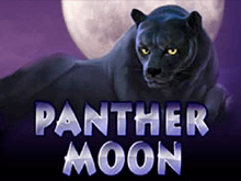 Аппарат Panther Moon на деньги