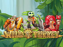 Wild Turkey от Netent – игровой автомат с выводом денег на Вебмани